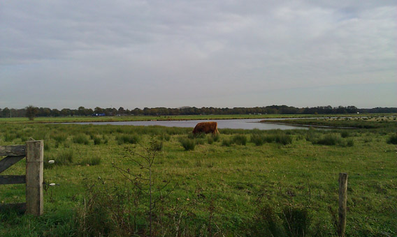 20111021_Bongeveen