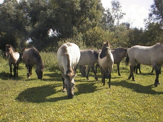Paarden die we tegen kwamen.