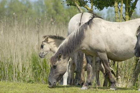 Paarden, foto van Nol Ploegmakers.