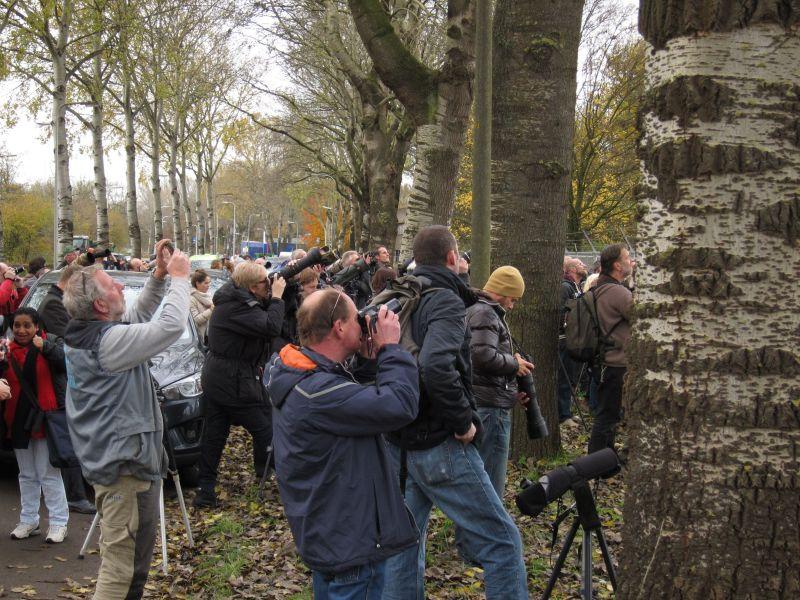 2013-11-26_Zwolle_Sperweruil_10
