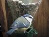 pimpelmees_powershot_a50_6_mei_2001