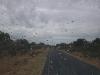 Elefants_on_the_road2