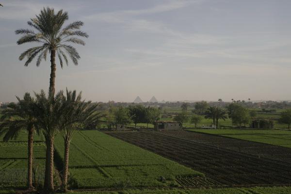 (c) 2006 jcdv - de Piramides vanuit Cairo.