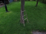 2017-05-20-Ladder_tegen_boom_Heggenmus_kleiner