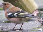 vink_man_21_dec_oosterpark1