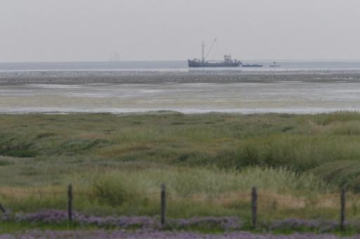 Steltlopers - Vlieland 20 juli 2006