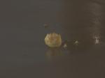 Restant van een Appel